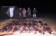 The result for four hunters for one night: 31 wild boar