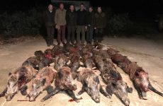 Another typical wild boar parade for one night.