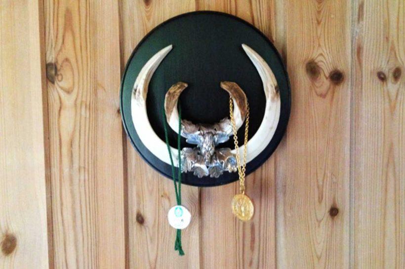 CIC gold medal tusks – Large keiler trophy