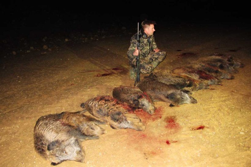 Hunter with wild boar