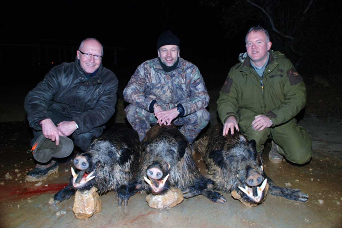 Three hunters with wild boar males (keilers)