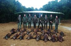 Exclusive wild boar, red stag and fallow deer stag hunting