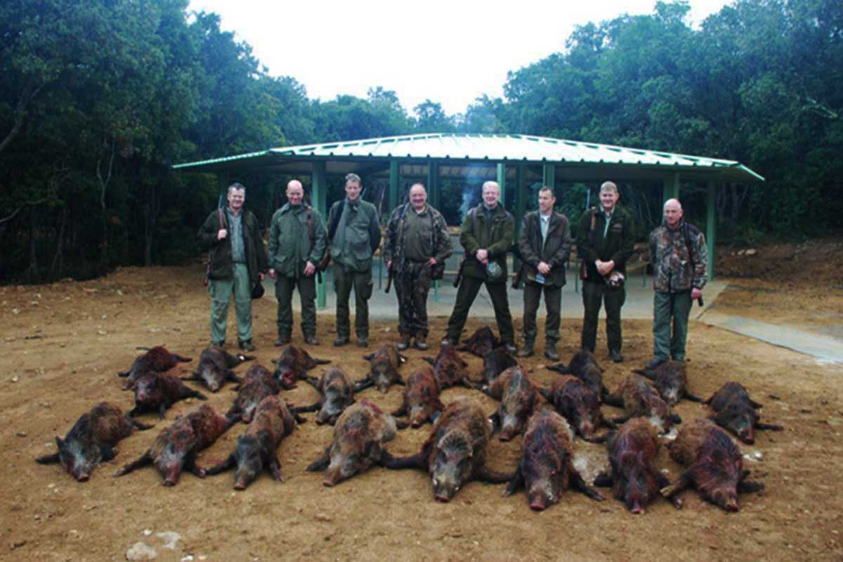 Exclusive wild boar, red stag and fallow dear stag hunting