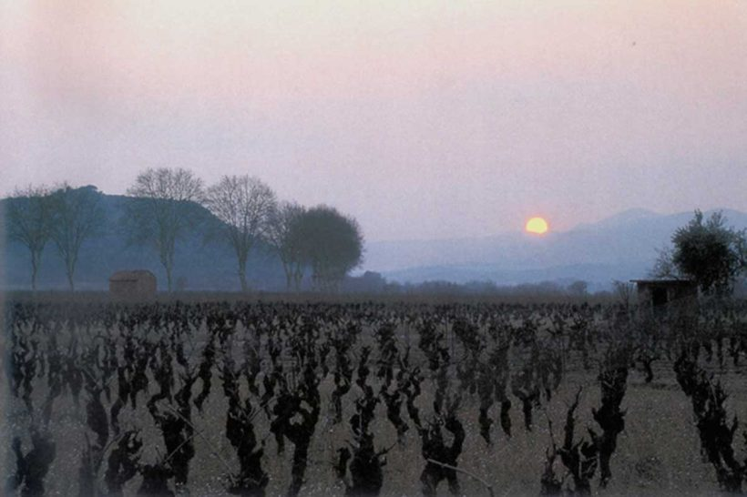 Sunrice over the winter vineyard